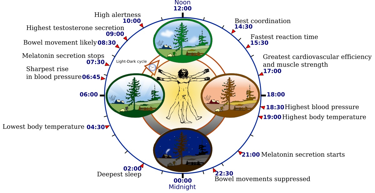 Sun exposure sets our circadian rhythm