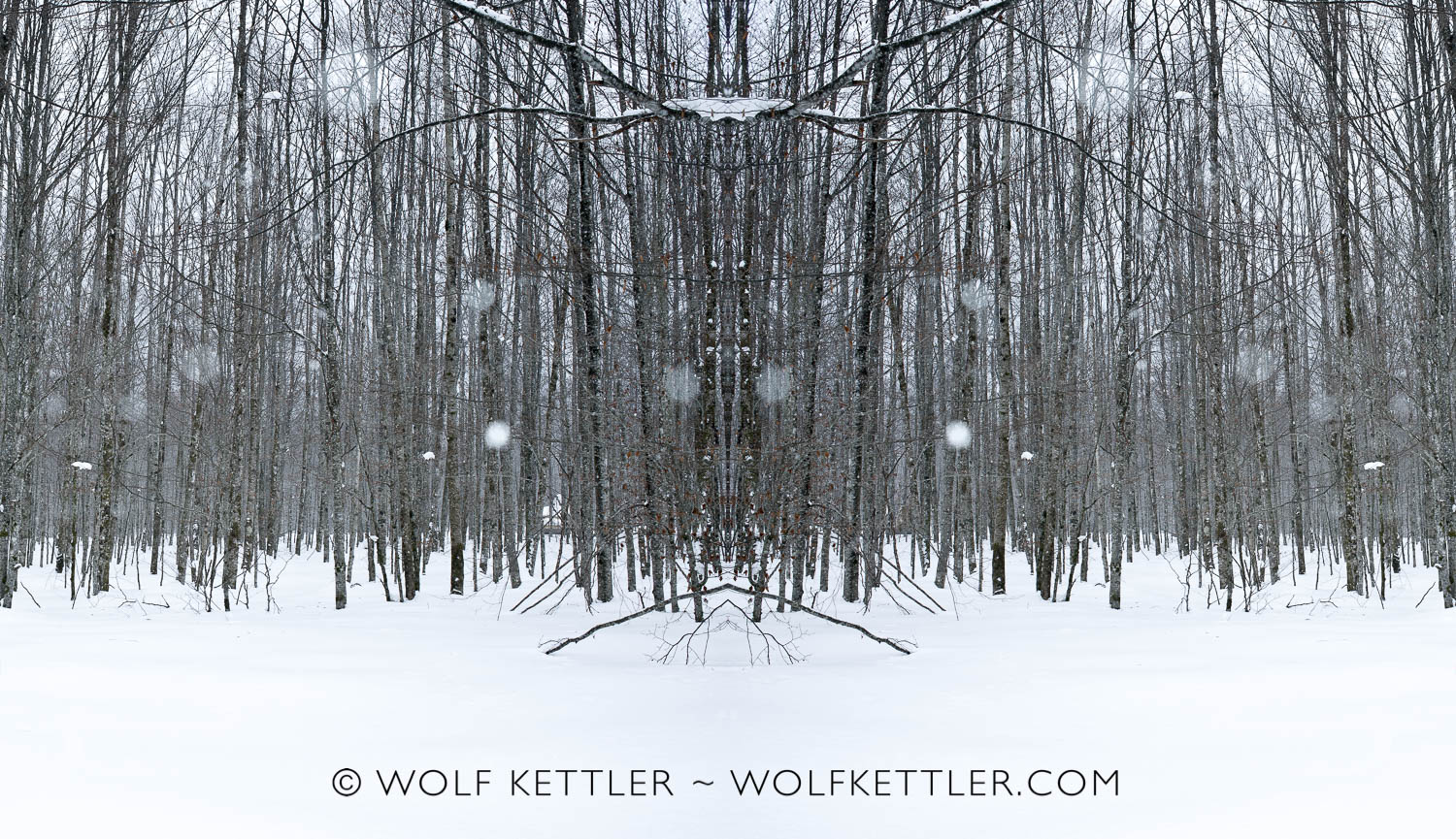 Winter Forest (2012 - 2018)