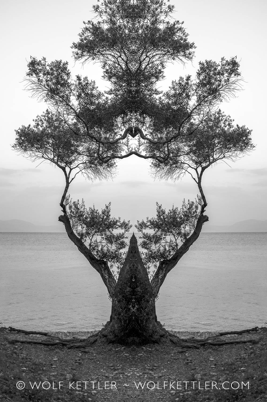 Tree at beach (2016 - 2019)