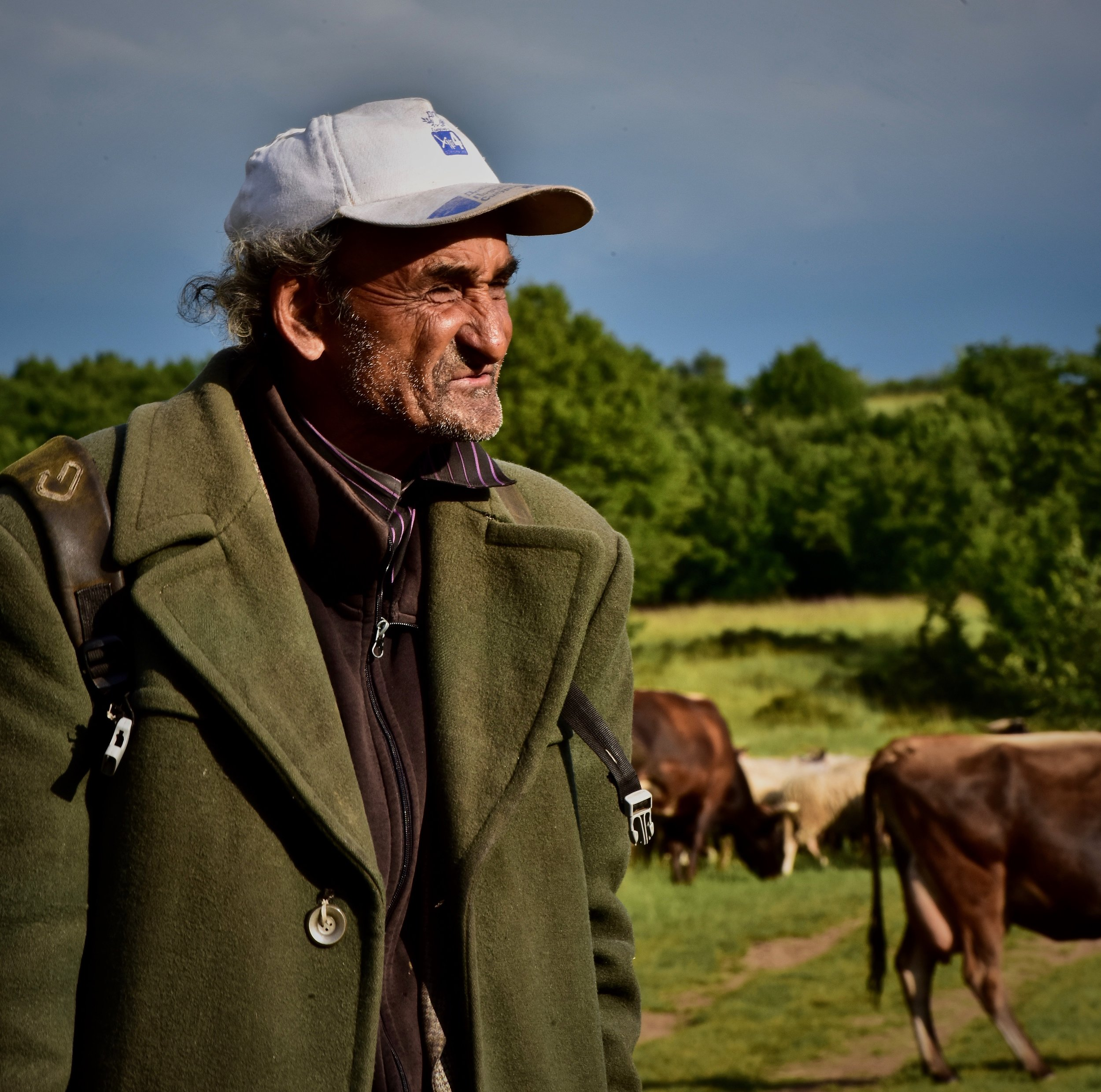 herder-shepherd-wrinkles-working-cows-northloop-phototour-bulgaria-alison-2017-MKH7515.jpg