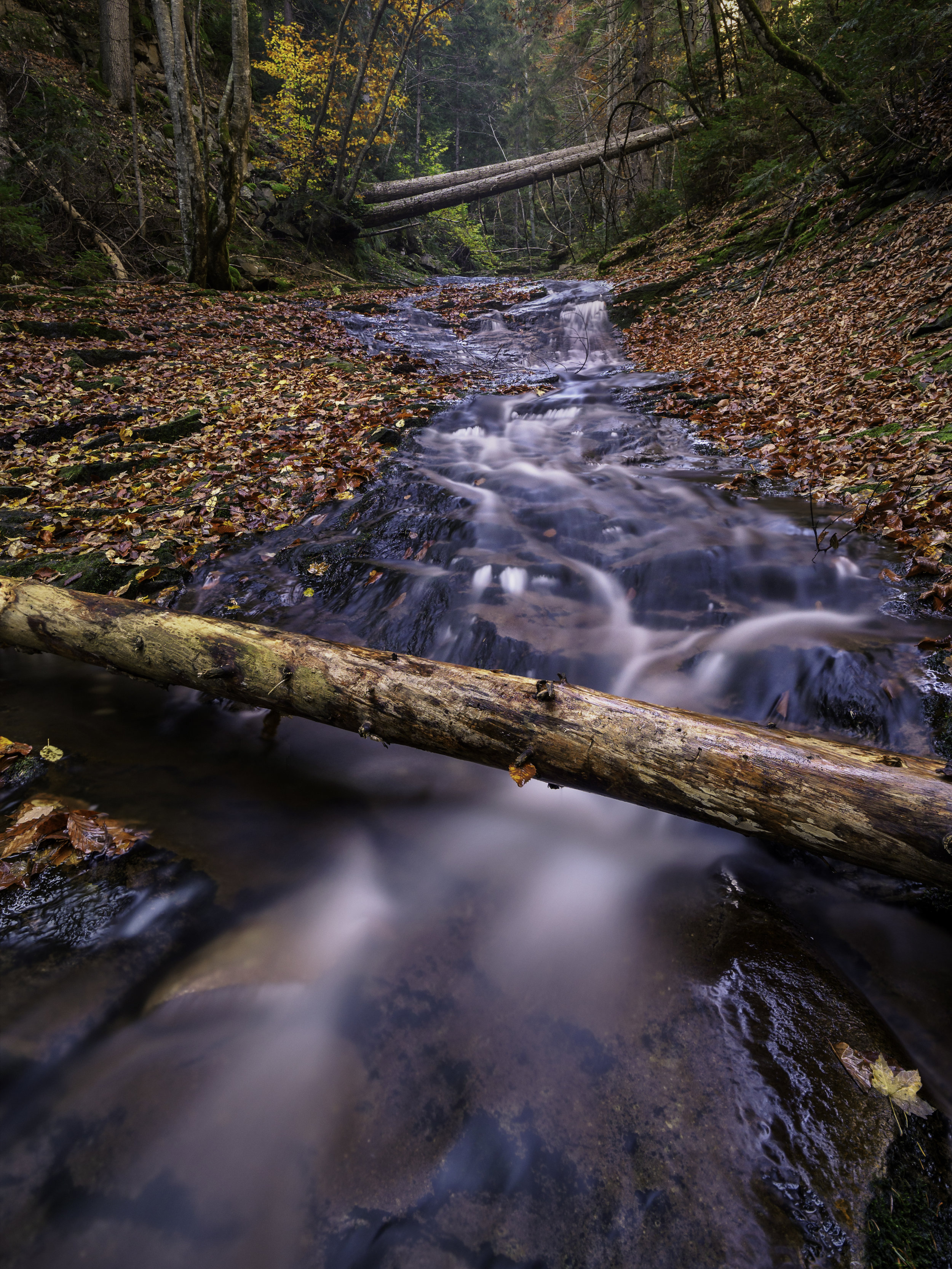 log-rhodopi-mountain-stream-fall-colours-autumn-leaves-canyonof waterfalls-colours-phototour-bulgaria-daniel-2018-portrait-Ver-2(Print).jpg