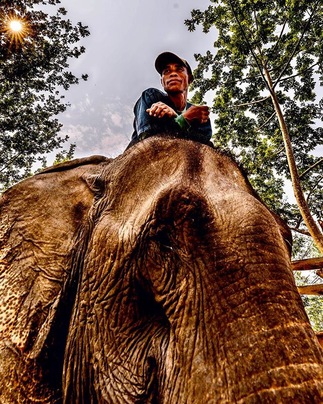 Yes, this elephant village sanctuary in Luang Prabang treats their rescued elephants like royalty, but what blew me away was that when this guy got off, the elephant walked up to me and I placed both hands on her face and she pushed her head into my head and we both stayed like that for an unbelievably long time, just making a connection. I rubbed her face and she gently pushed back. I never wanted it to end. 🐘❤️ . . . . . #photography #documentaryphotography #photooftheday #portraitphotography #portrait #portraits #sonya7riii #lao #ig_travel #laos🇱🇦 #streets_storytelling #travelphotography #spiritualconnection  #photo_dailydose #ig_respect #globe_portraits #theportraitpr0ject #earth_portraits #remoteexpeditions #natgeohumanity #humanity_shots_ #_souloftheworld #thestreetphotographyhub #fivestars_people #elephantsantuary #nature_of_our_world #elephantlove #elephantlover