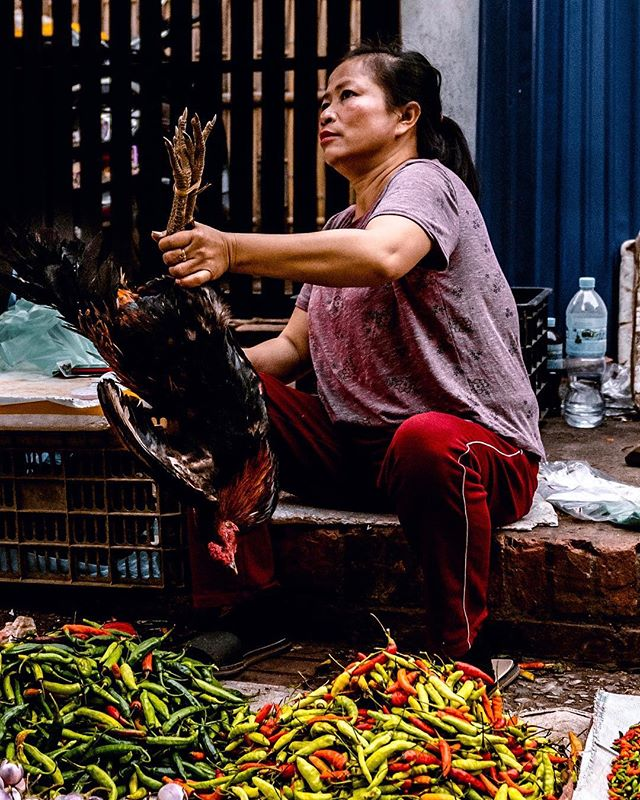 Besides typical produce, the morning market in Luang Prabang, Laos also sells less usual food like bullfrogs, jungle bats, turtles, rats on a stick, caged birds, snakes, bee larva, bagged blood, and a buffet of insects. . . . . . #photography #documentaryphotography #photooftheday #portraitphotography #portrait #portraits #sonya7riii #lao #ig_travel #laos🇱🇦 #streets_storytelling #travelphotography #travelgram  #photo_dailydose #ig_respect #globe_portraits #theportraitpr0ject #earth_portraits #remoteexpeditions #natgeohumanity #humanity_shots_ #_souloftheworld #thestreetphotographyhub #fivestars_people #farmtotable #poultry #thefeedfeed #f52grams