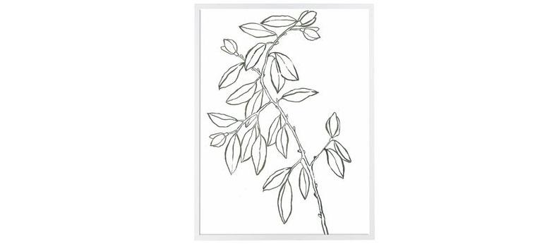 Leaf_Sketch_I_1600x1600.jpg
