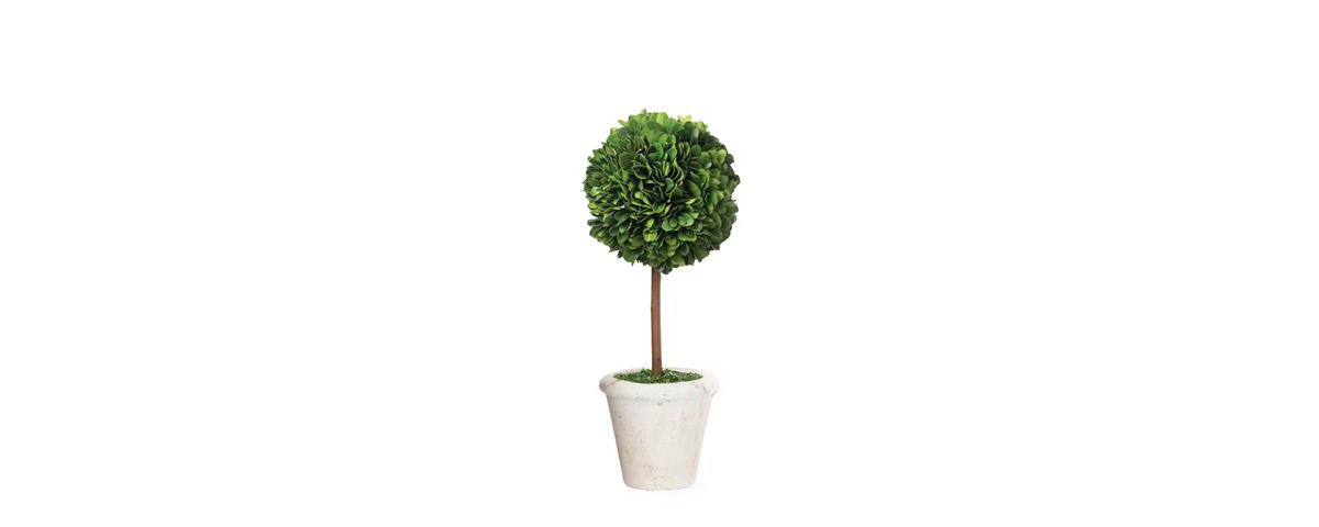 Small_Topiary_480x480.jpg