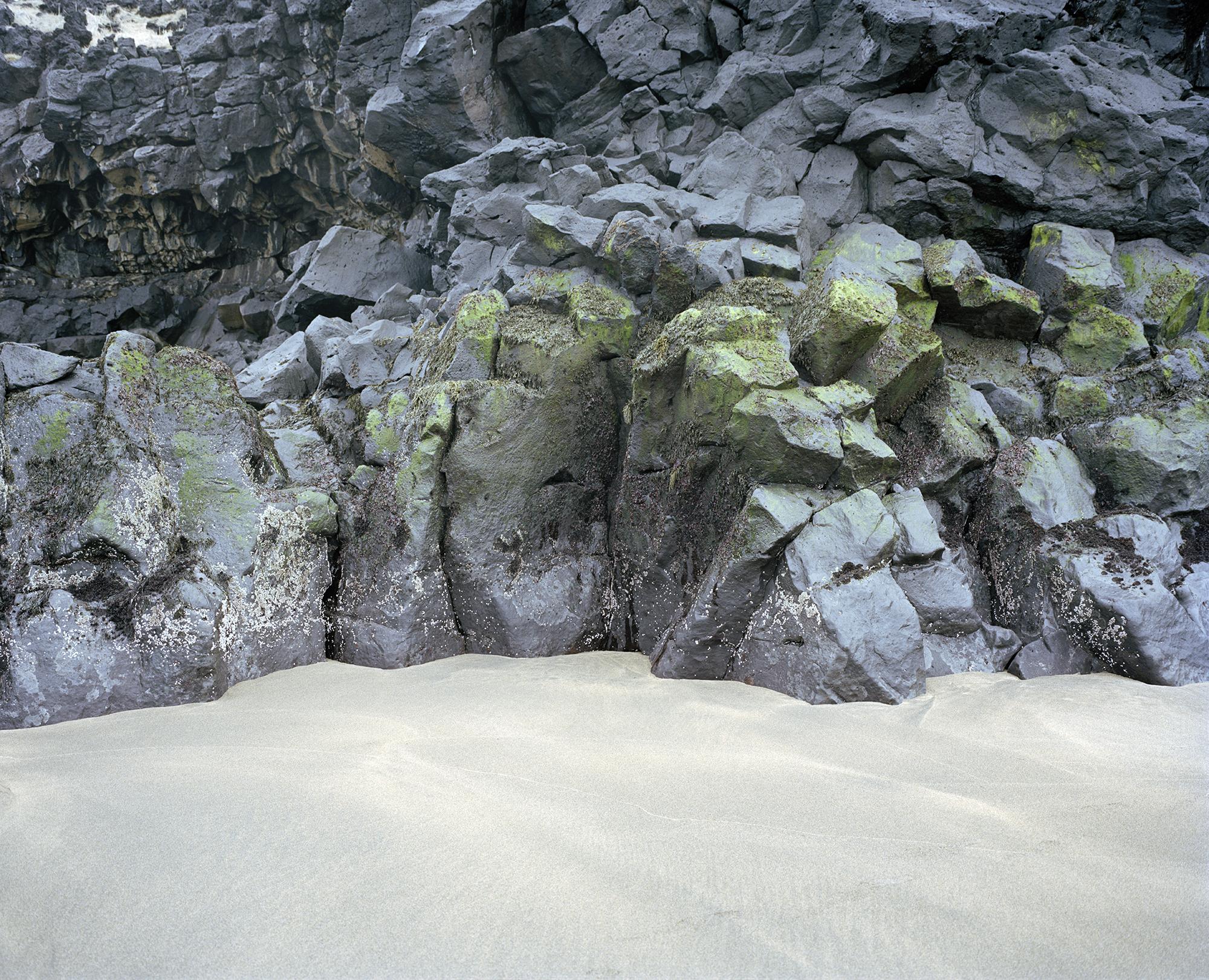 barnacles copy.jpg
