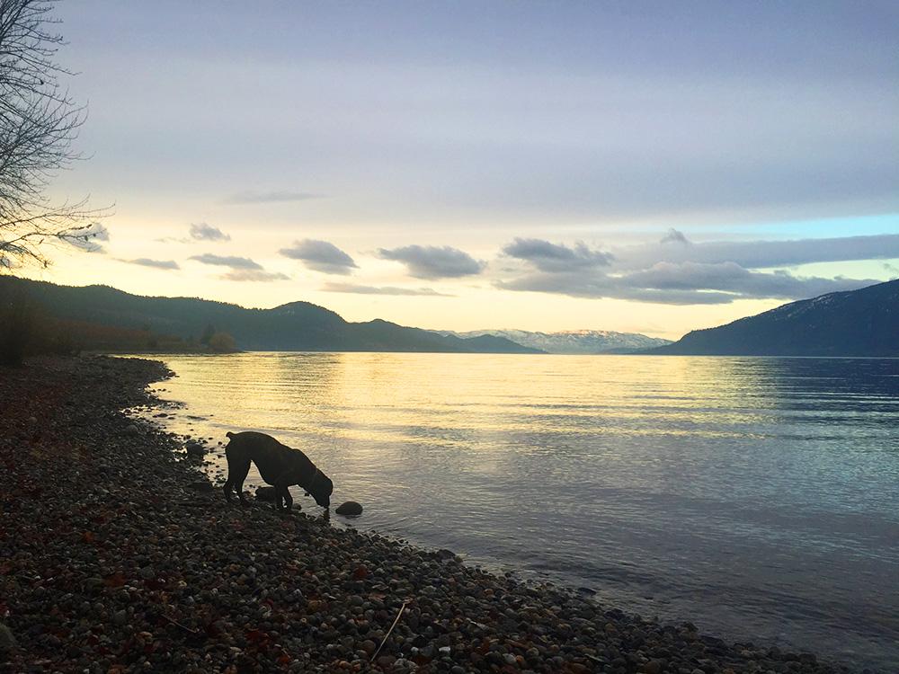 ollie-lake-run.jpg