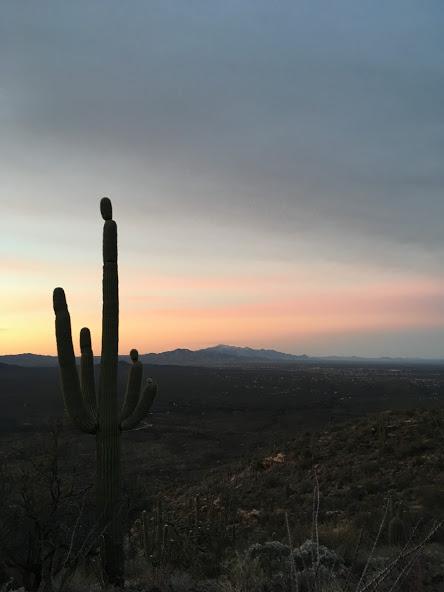 The saguaro stands alone