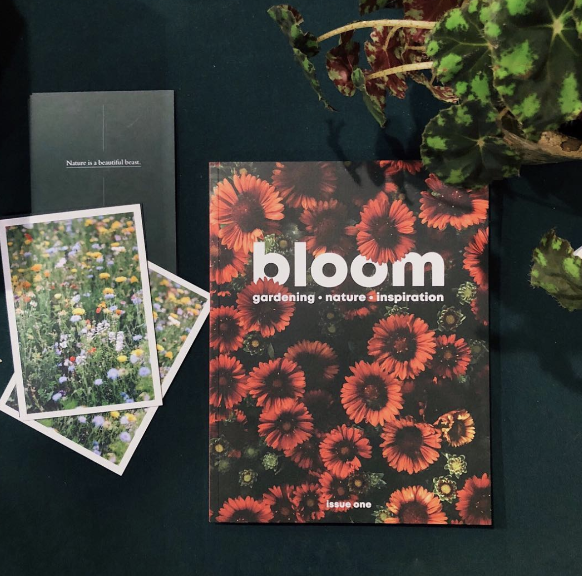SUBSCRIPTION TO    BLOOM MAGAZINE     This magazine launched in September and has become an instant hit. It's truly irresistible for any plant lover. It's a visually stunning and inspiring collection of practical tips, insightful interviews and to-die-for imagery that will become a firm favourite of any gardener - whether your loved one is a seasoned pro, just starting out with a veg patch, or has a growing indoor plant collection we're certain they'll love this publication.    £10 - £25    Subscribe    here