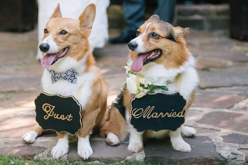 TUCKER & ZOEY - Tucker loves to hike and play fetch, and Zoey likes to make friends with new people. They both love snacks and were so happy to be apart of their parent's, Jenny & Peyton's wedding in 2014.