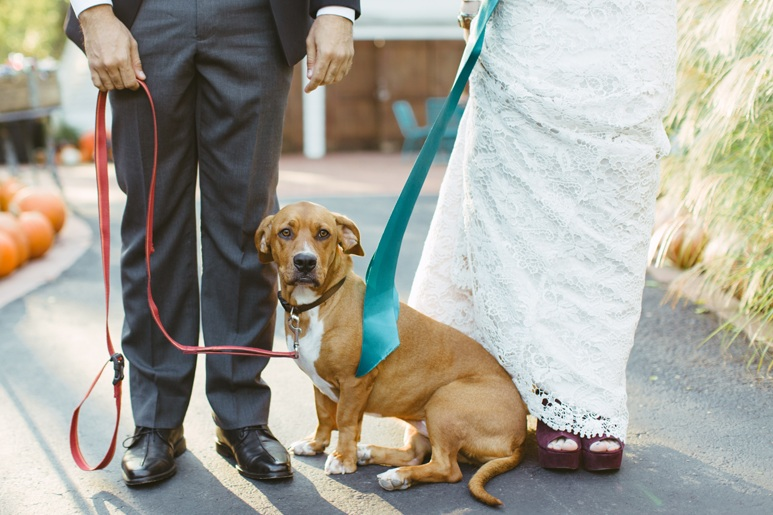 ELOISE - Eloise is a calm basset hound who just loves her humans, Lauren & Luiz! Luiz gifted her to Lauren for her birthday. Eloise was excited when he asked Lauren for her right hound in marriage. She was even more excited when she got to be apart of their big day!