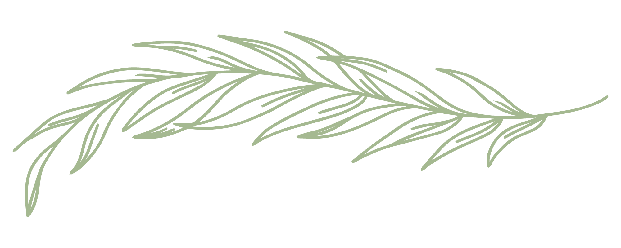 Single-Branch.png