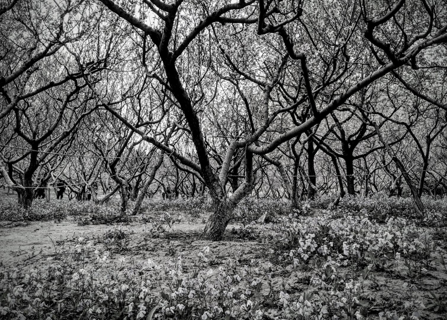 Kelsey - Tree 1.png
