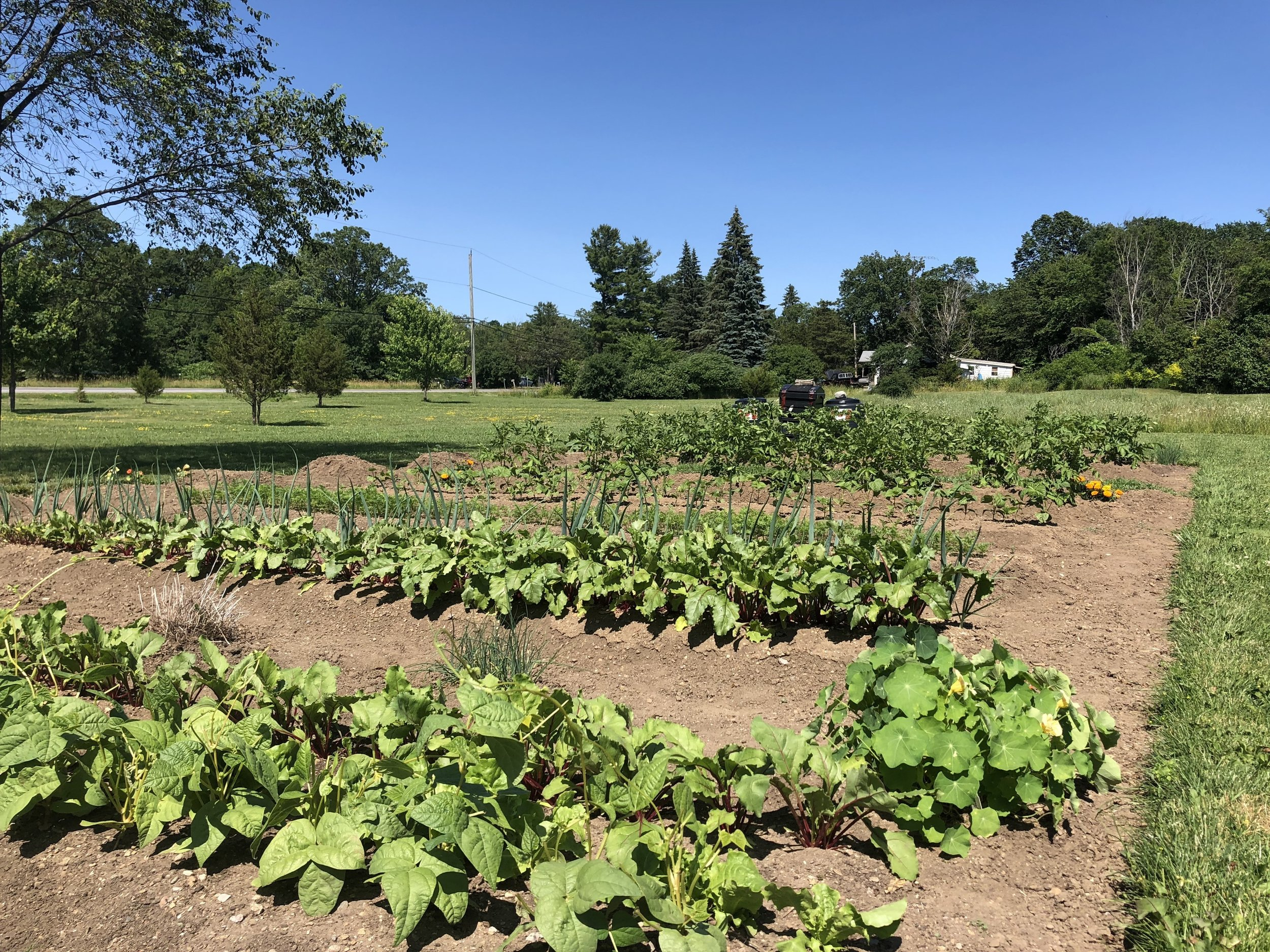 THe Vegetable Gardens behind the house. We love them. and there's Still lots of room between here and the house for a pool.