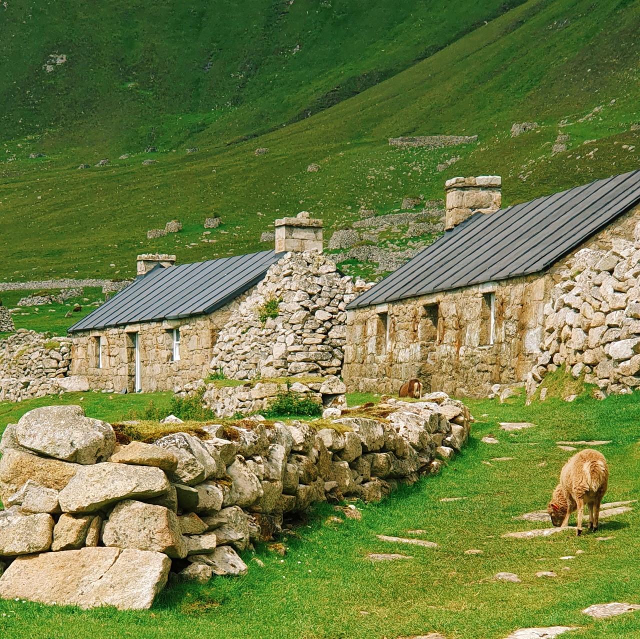st kilda village and sheep.jpg