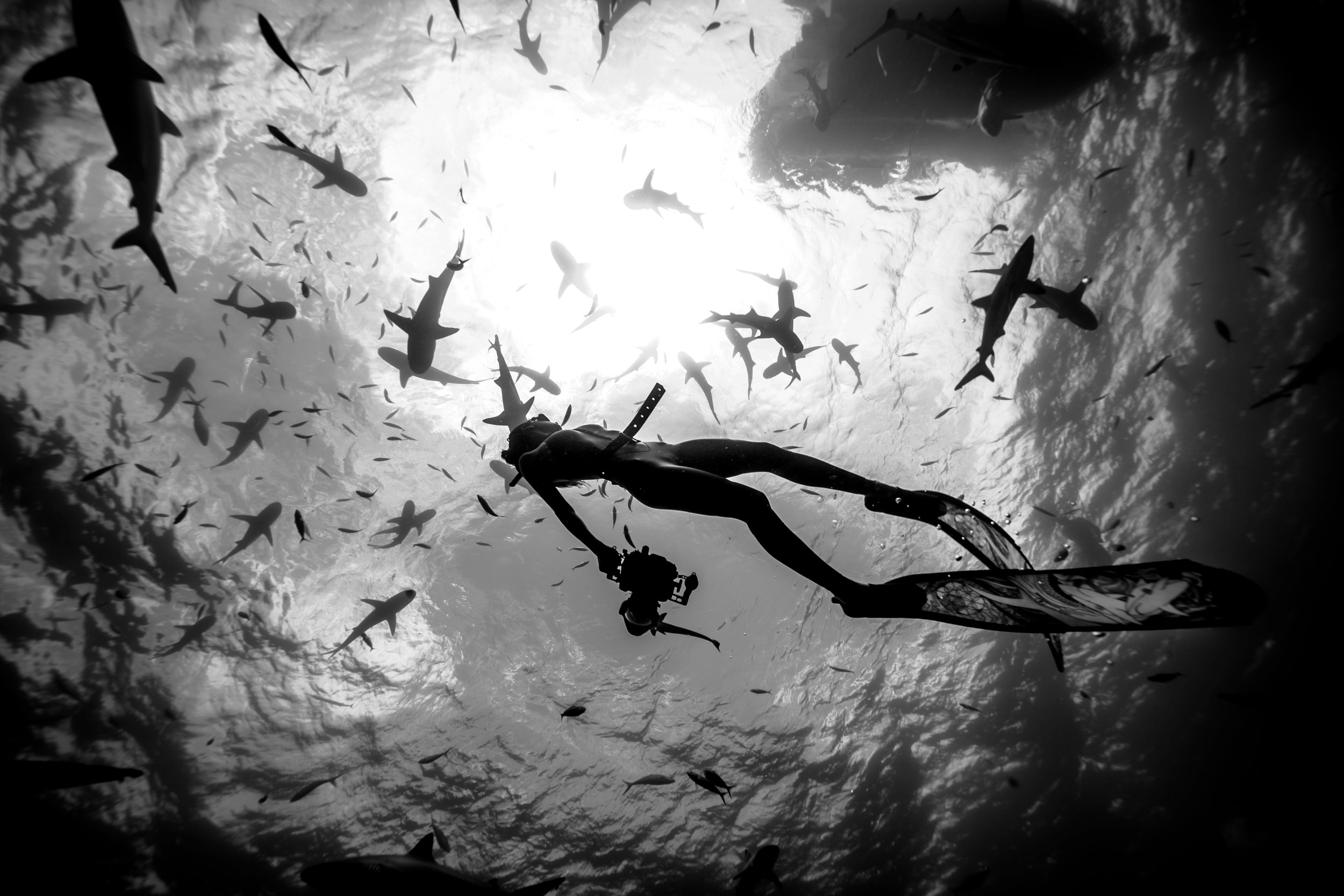 Madison with reef sharks in Tahiti. Photo by Perrin James