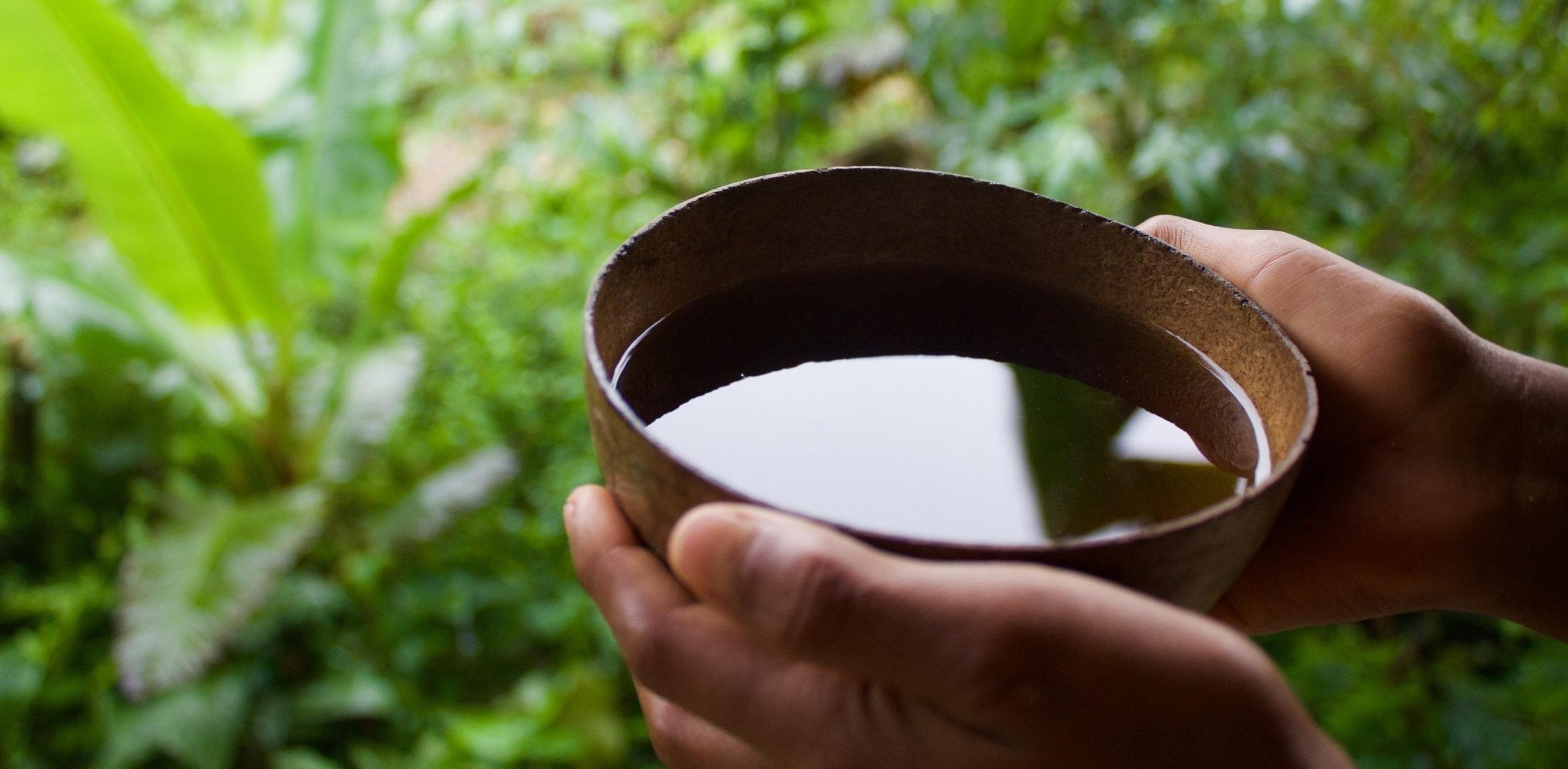 Guayusa tea.jpg