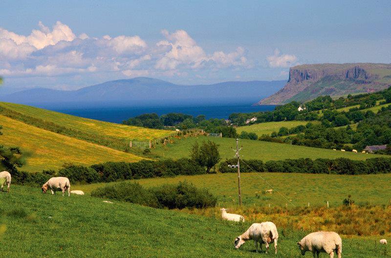 ANTRIM SHEEP ART WORKSHOPS IN IRELAND.png