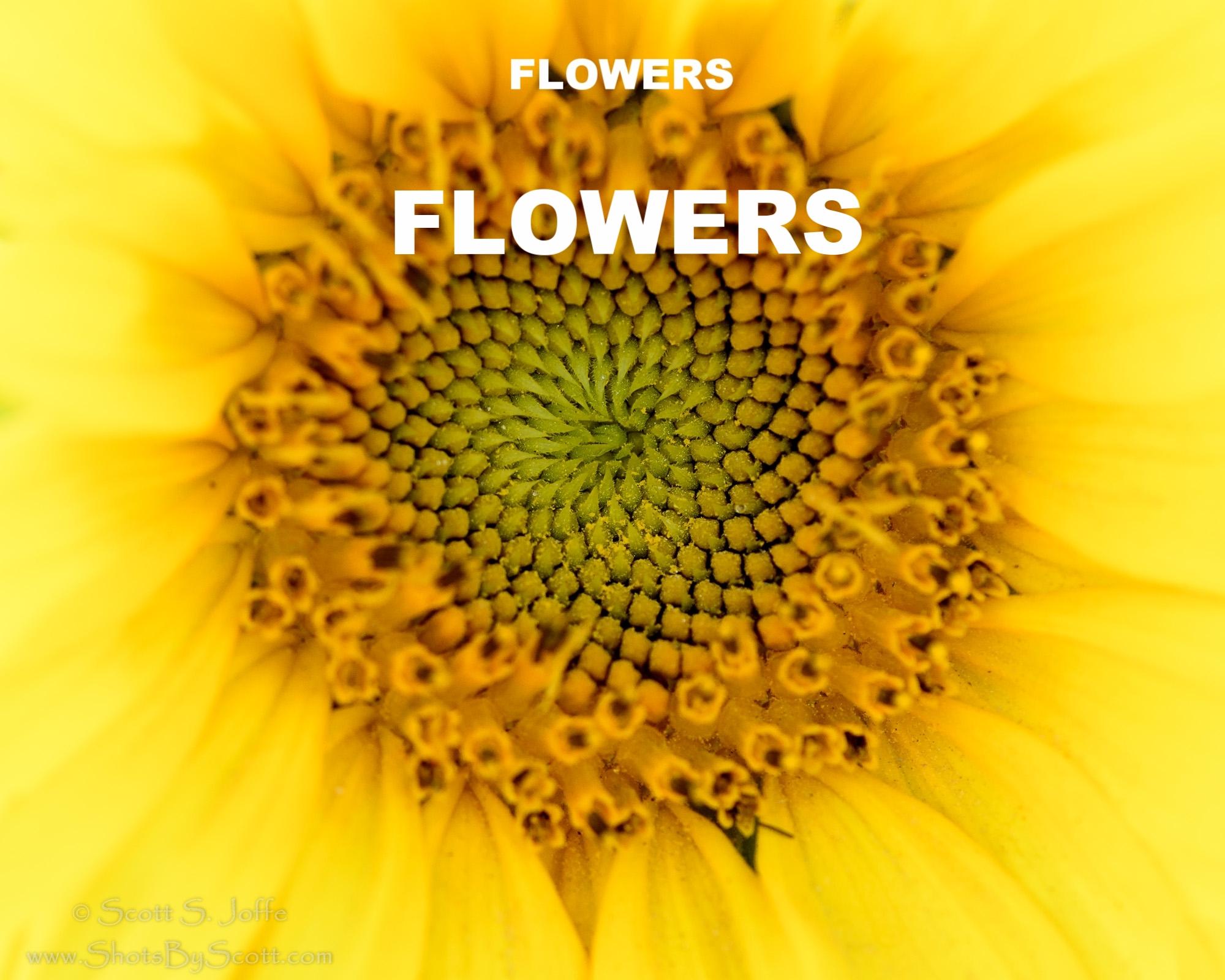 20170219-Sunflowers-0029.jpg