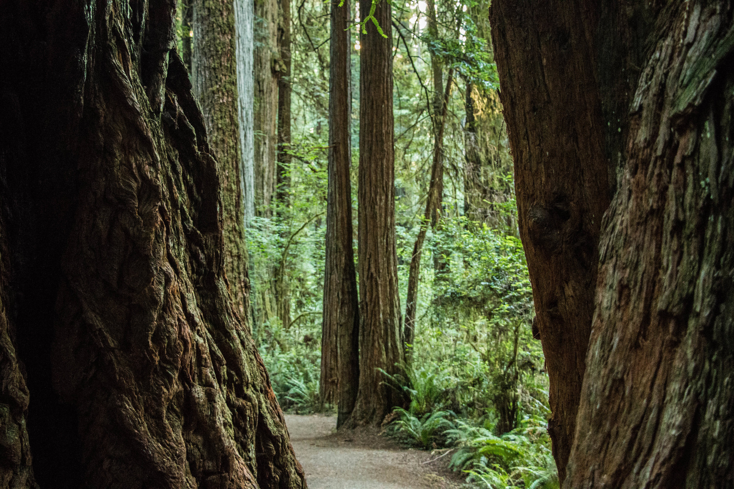 Redwood National Park, California
