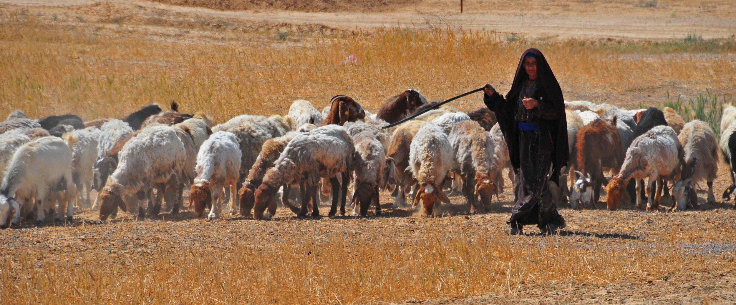 Shepherds Travel Israel