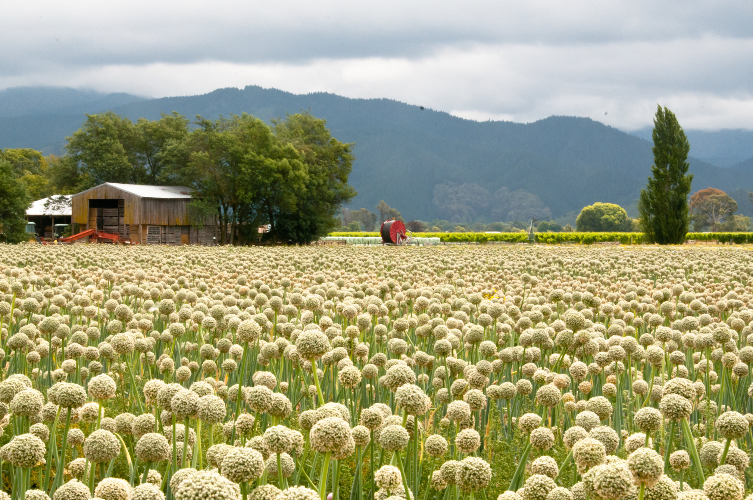 Kiwi Farm - New Zealand - 2012