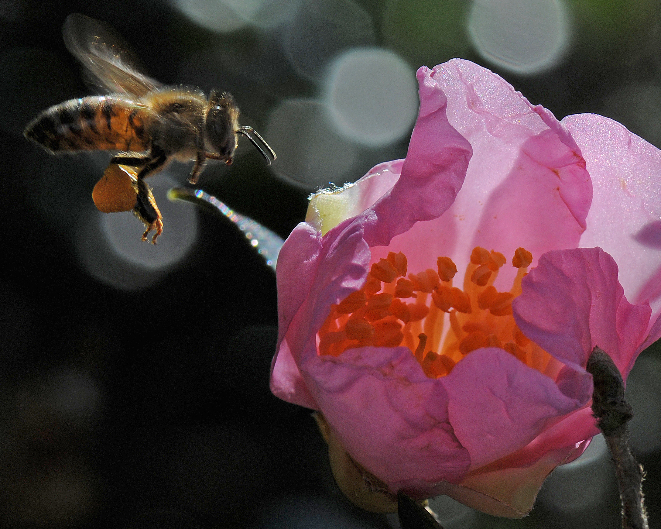 Ro's Bee - 2008