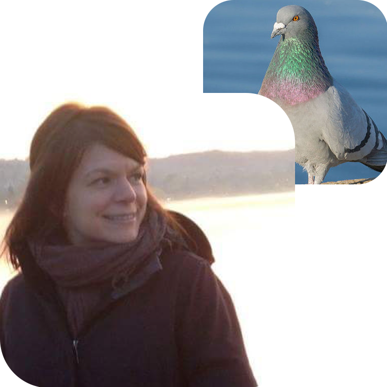 KATE REDMAN, PROJECT DIRECTOR & BOARD    Bird Twin:  Rock Pigeon   Why Commongrounds?  Because I can't wait to hang out in this building.   About Kate:  Kate is a community enterprise attorney and founder of  Commonplace Law  and  Commonplace , a coworking space and future tenant of Commongrounds.
