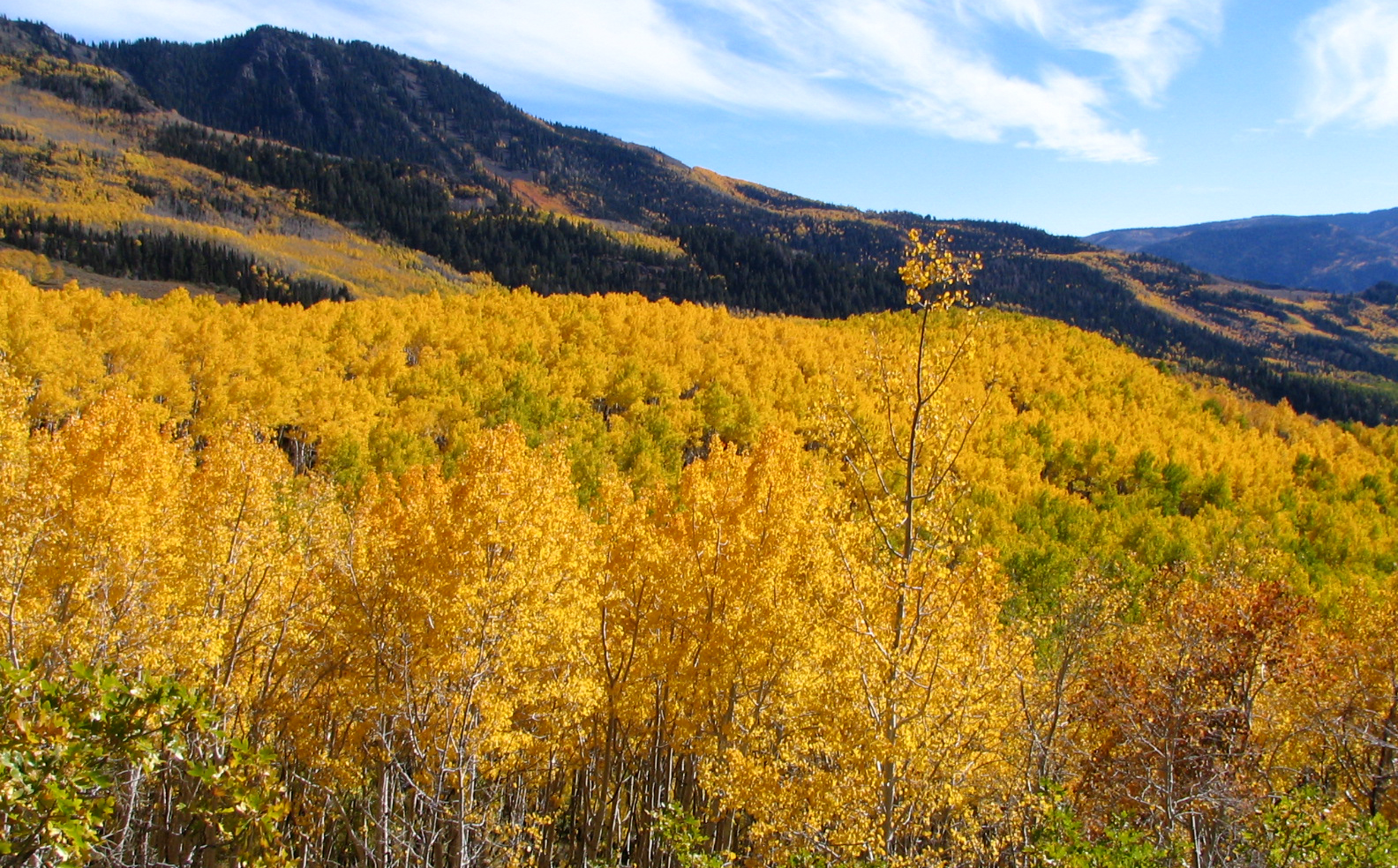 """These aspen trees in Utah are one of the world's largest organisms: a forest of 107 acres, which all stem from a single root system. In Colossians 2:7, Paul says to be rooted and built up [in Christ], established in the faith,"""" and in Colossians 2:2 he tells the Colossian believers to be """"knit together in love."""""""