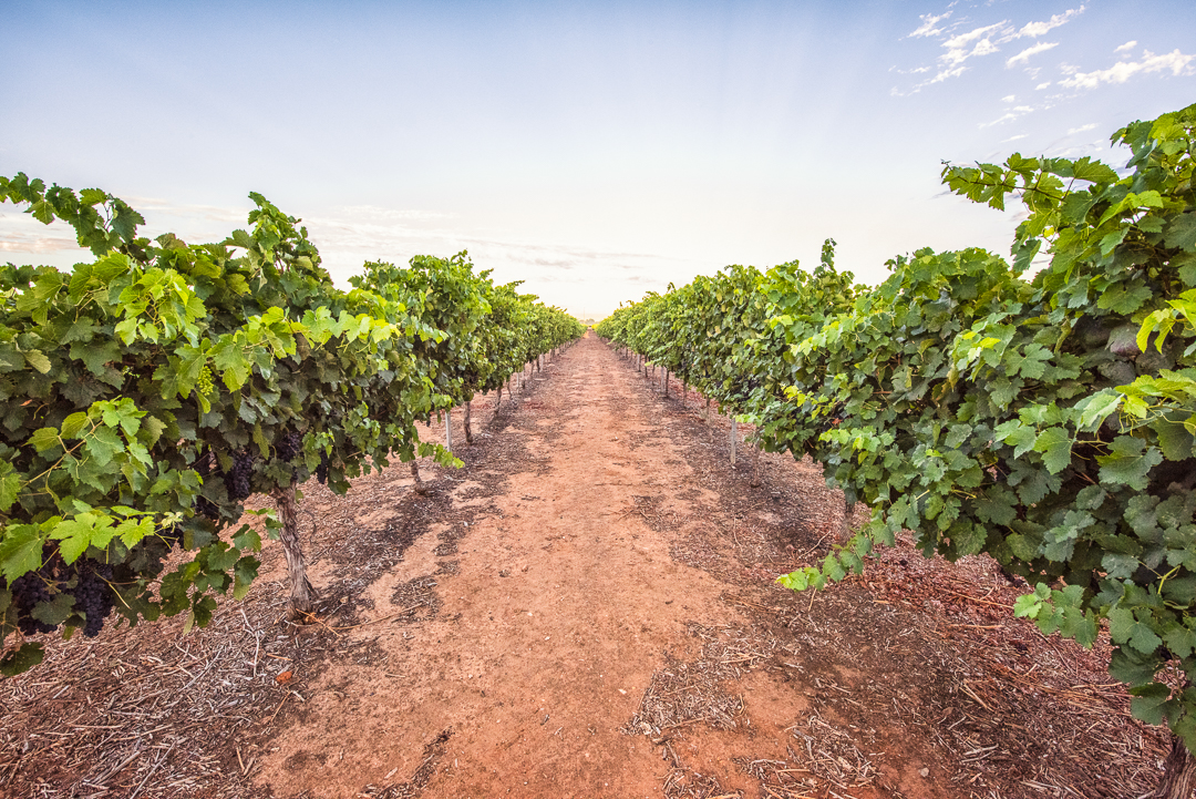 Olive Farm Wines Internet Sized-20.jpg