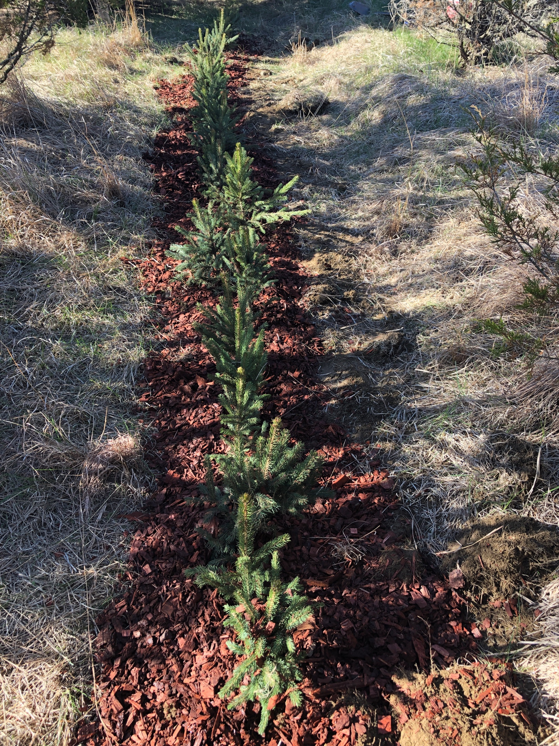 """Reserve the """"Spruce"""" package! - The Spruce package includes Rental for both Friday and Saturday !"""