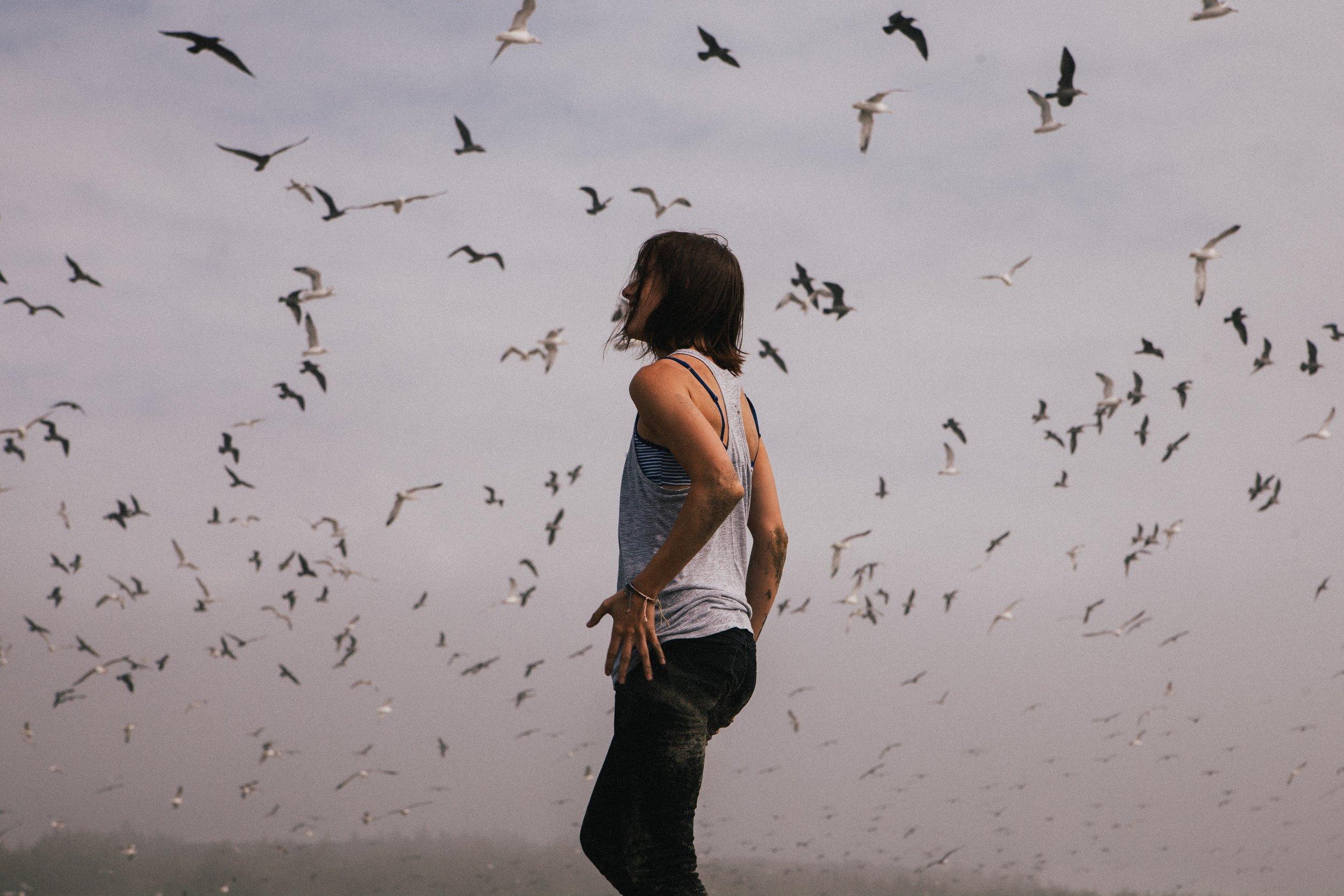 solowbirds.jpeg