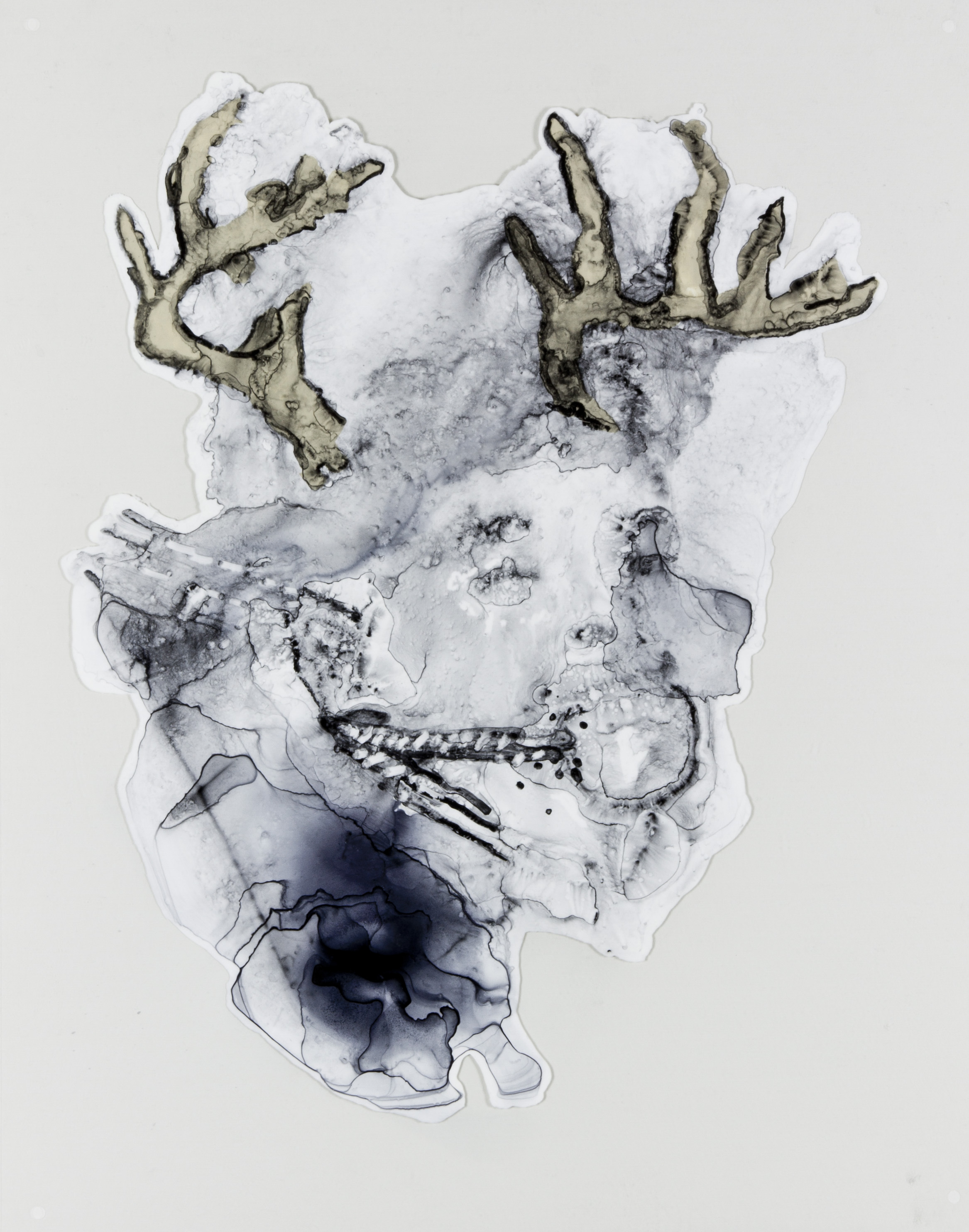 His Antlers were Prominent, 2017, 19x24 inches, Watercolor and acrylic on transparent mylar