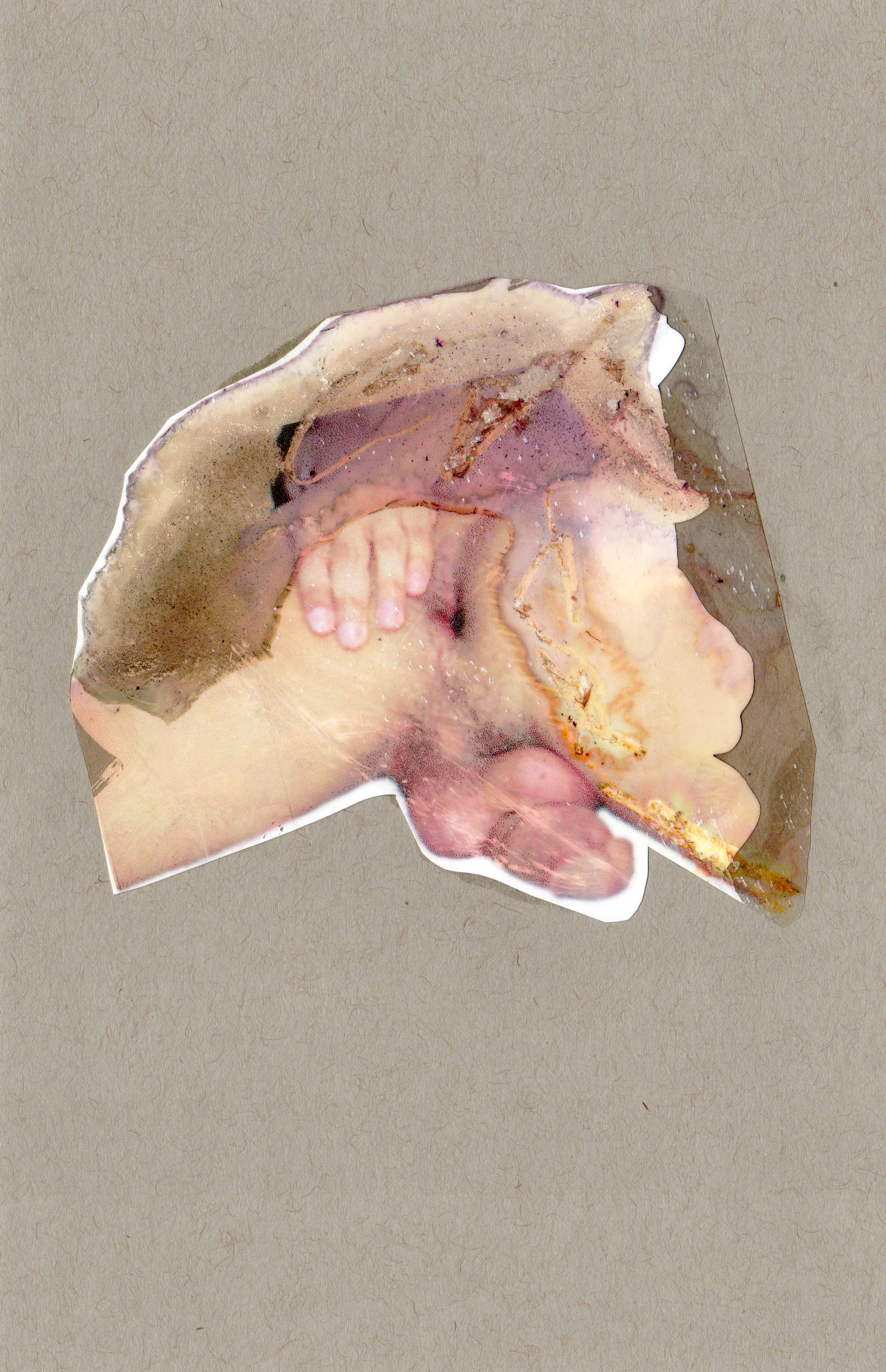 Lure, 2014, paint transparency archival ink and paper, 8.5x5.5 inches