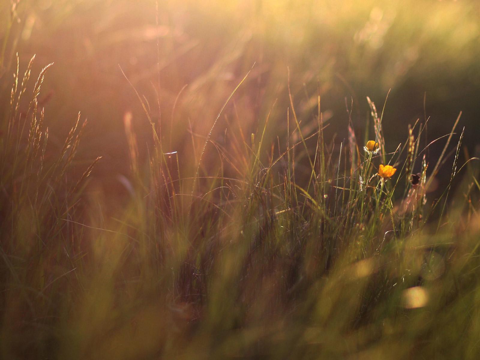 fondo_hd_43_hierbas_flores_luz_sol.jpg