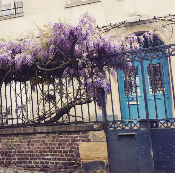 Wisteria Tree Giverny