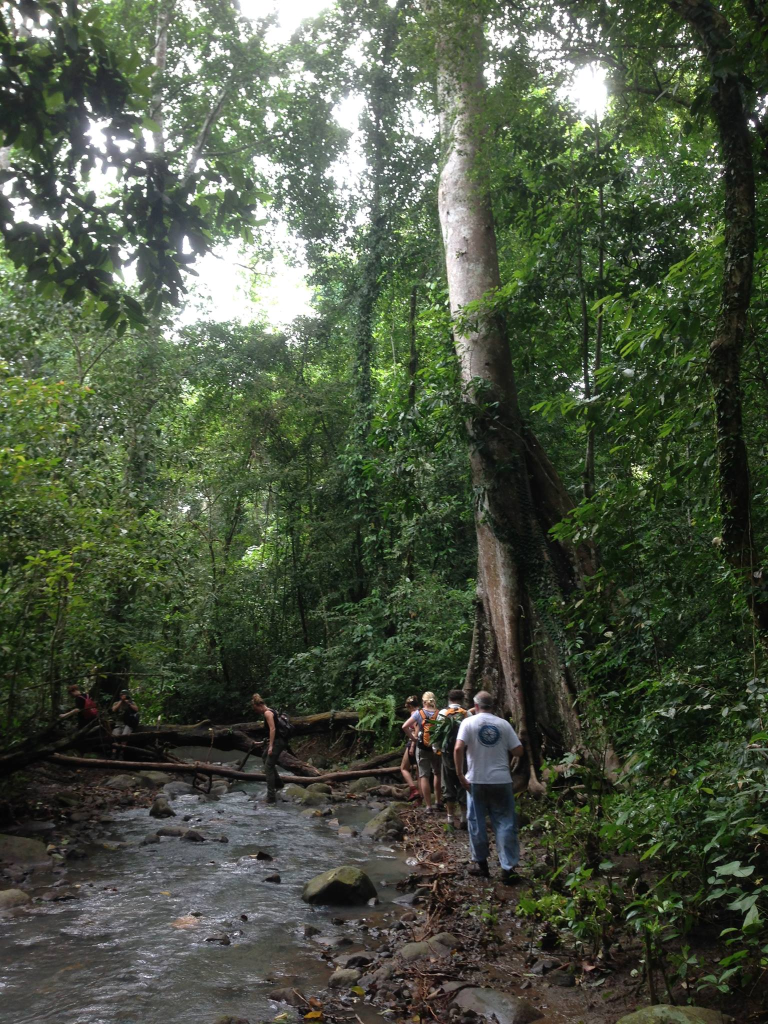 bali rainforest.jpg
