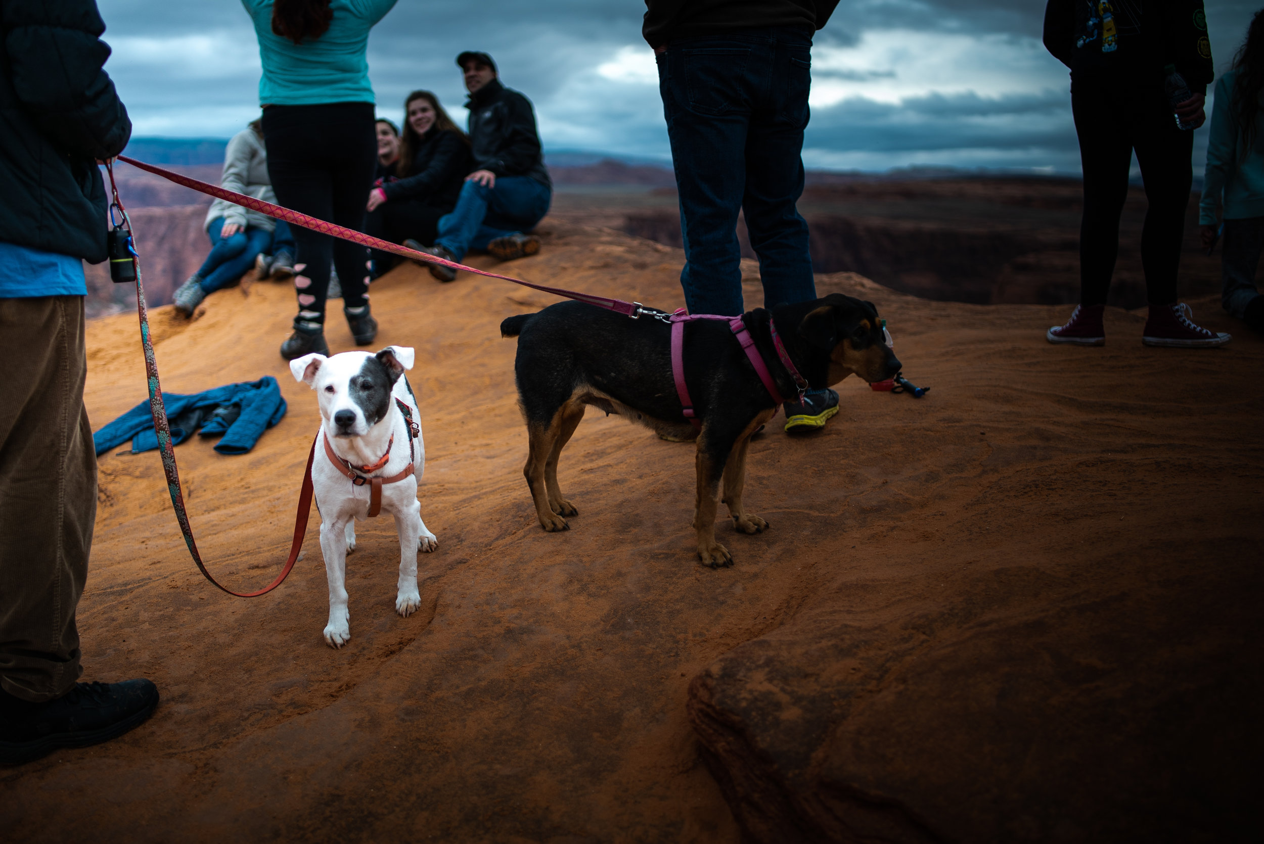 Pets are allowed at Horseshoe Bend, which I found strange.