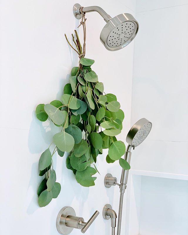 Steam it up! 🚿 Tying an eucalyptus plant in the shower head will not only make your shower smell (and look) amazing but also potentially help ease allergies and pain. 🌿 The steam and heat coming from the shower causes the eucalyptus to release essential oils that  are often used to relax, de-stress and release congestion.💆🏼‍♀️ Good for your mind and body 😉✨ • • • • #selfcare #vegan #vegana #healthcoaches #showerbouquet #liveinspired #mindbodysoul #holistliving #eucalyptus #wellnessjourney #nourishyourself #lifehack #healthcoaching #healthcoachlive #healthyhabbits #livehealthy #healthyandhappy #youarewhatyoueat #nourishyourbody #foodmatters #freshflowers #holistichealth #eatinghealthy #eatclean #cleaneating #iin #iinalumni #wellandgood #mindbodygreen
