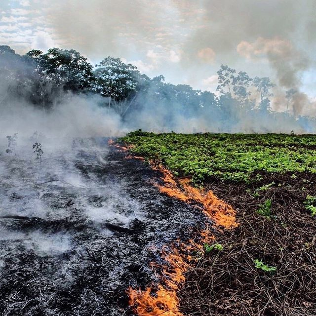 #Regram @rainforestalliance: The lungs of the Earth are in flames. 🔥 The Brazilian Amazon—home to 1 million Indigenous people and 3 million species—has been burning for more than two weeks straight. There have been 74,000 fires in the Brazilian Amazon since the beginning of this year—a staggering 84% increase over the same period last year (National Institute for Space Research, Brazil). Scientists and conservationists attribute the accelerating deforestation to President Jair Bolsonaro, who issued an open invitation to loggers and farmers to clear the land after taking office in January.⁣ ⁣ The largest rainforest in the world is a critical piece of the global climate solution. Without the Amazon, we cannot keep the Earth's warming in check. ⁣ ⁣ The Amazon needs more than our prayers. So what can YOU do?⁣ ⁣ ✔ As an emergency response, donate to frontline Amazon groups working to defend the forest. ⁣ ⠀⠀⠀⠀⠀⠀⠀⠀⠀ ✔ Consider becoming a regular supporter of the Rainforest Alliance's community forestry initiatives across the world's most vulnerable tropical forests, including the Amazon; this approach is by far the most effective defense against deforestation and natural forest fires, but it requires deep, long-term collaboration between the communities and the public and private sectors. Link in bio.⁣ ⠀⠀⠀⠀⠀⠀⠀⠀⠀ ✔ Stay on top of this story and keep sharing posts, tagging news agencies and influencers. ⁣ ⠀⠀⠀⠀⠀⠀⠀⠀⠀ ✔ Be a conscious consumer, taking care to support companies committed to responsible supply chains.⁣ Eliminate or reduce consumption of beef; cattle ranching is one of the primary drivers of Amazon deforestation. ⠀⠀⠀⠀⠀⠀⠀⠀⠀ ✔ When election time comes, VOTE for leaders who understand the urgency of our climate crisis and are willing to take bold action—including strong governance and forward-thinking policy.⁣ ⁣ #RainforestAlliance #SaveTheAmazon #PrayForAmazonia #AmazonRainforest #ActOnClimate #ForestsResist  #ClimateCrisis  #vegan  #plantbased #plantpowered 📸: @mohsinkazmitakespictures