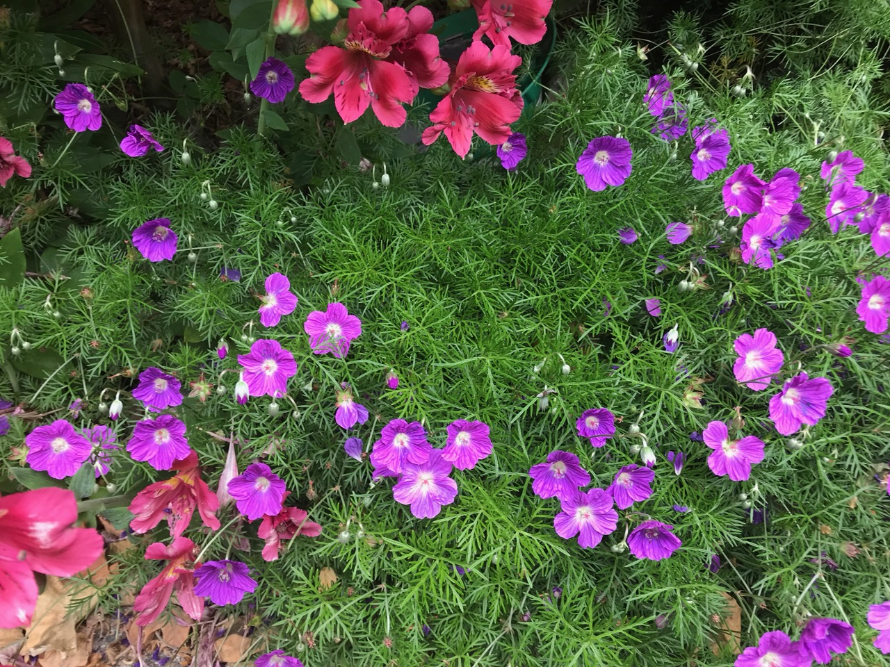 pink-and-red-flowers.jpg