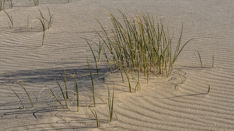Open_Coastal Grass_R Nancarrow_Agr_DPI Merit