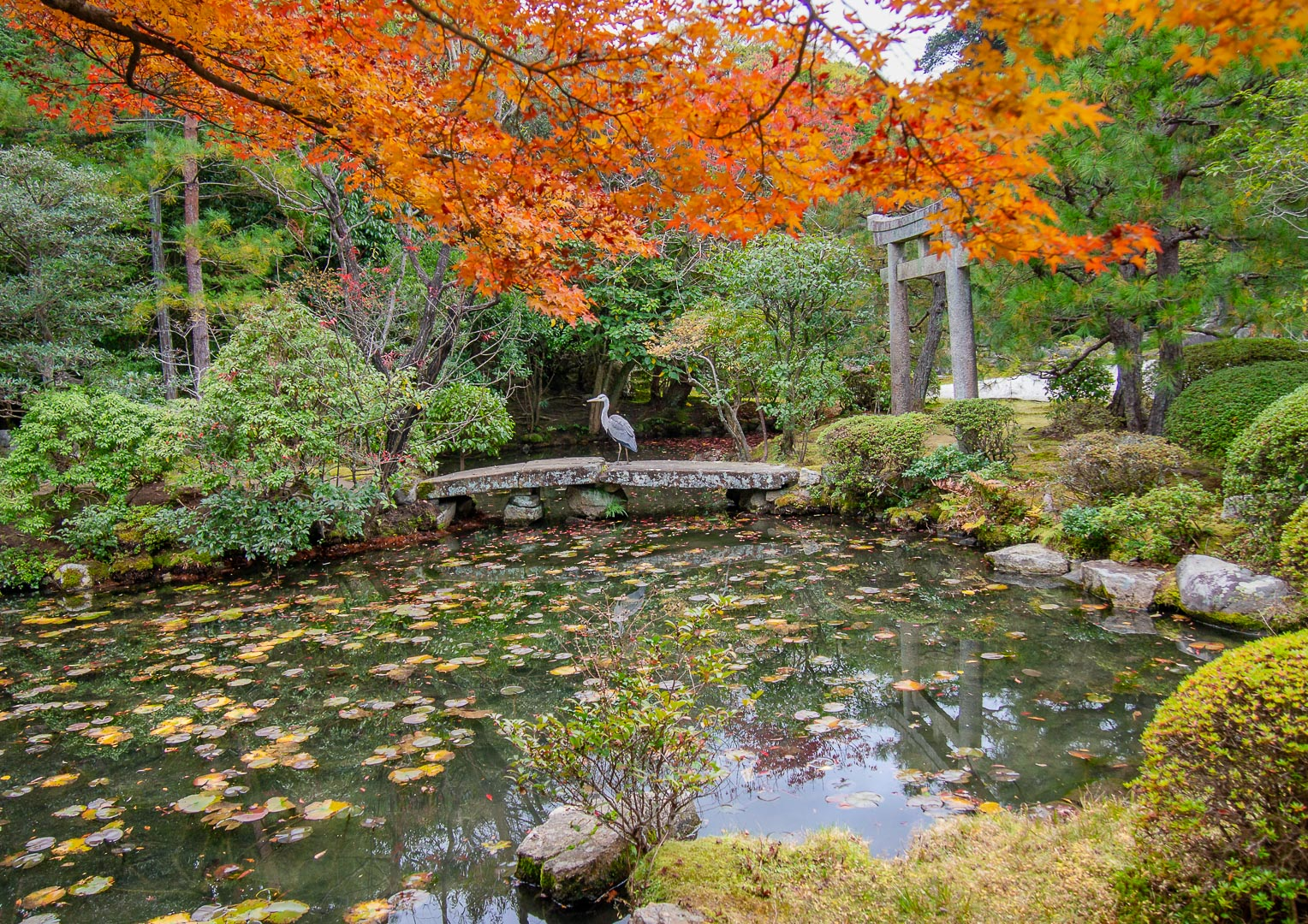 The Fall in Japan - 2011