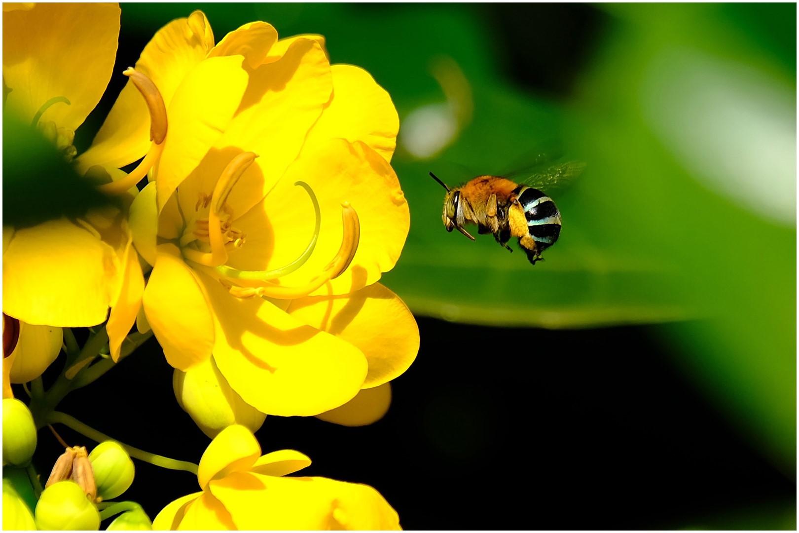 Open DPI_Sweet Treat in the Garden_Chris Pigott_Bgr HONOUR