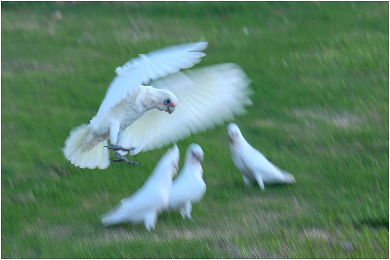 Movement_Stand By for a Landing_Chris Pigott_Bgr_DPI_Honour