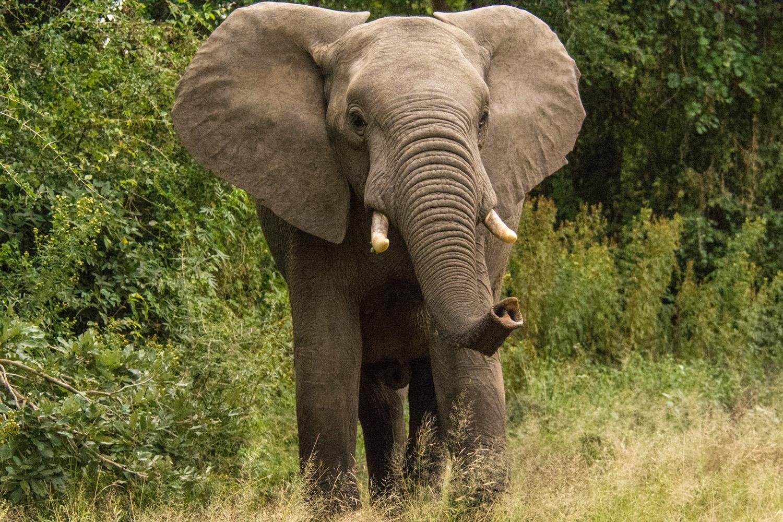 Open_Approaching Elephant_Carol Clark_B Grade_DPI_Merit