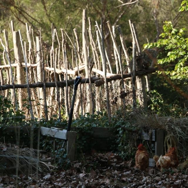 Fence and hens