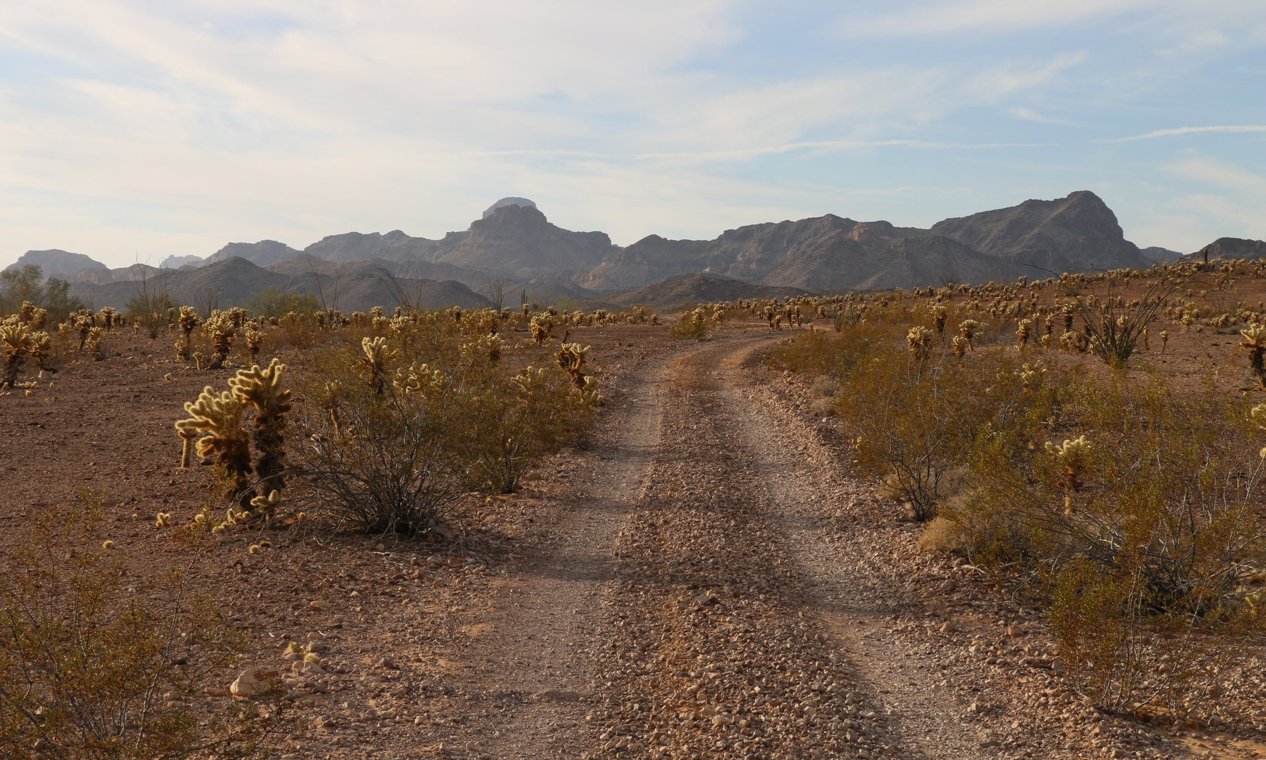 Castle Dome Mountains Trail.JPG