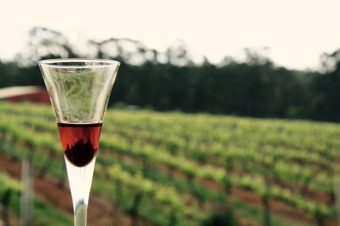 Hunter Valley wine glass vineyard