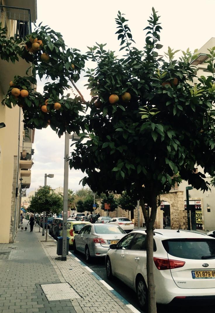 orange trees in Tel Aviv